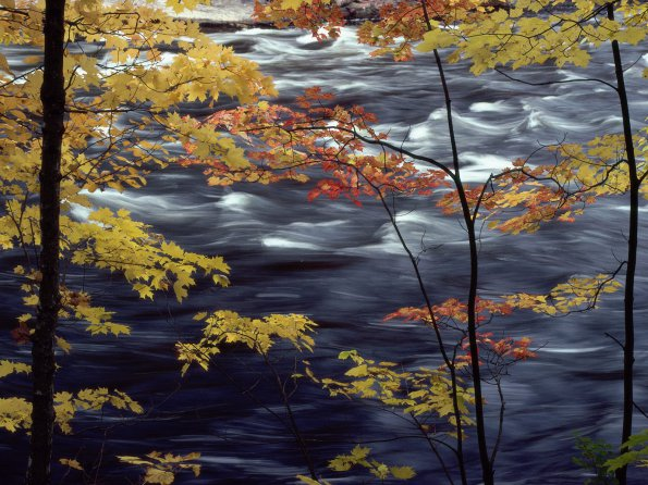 Autumn Colors a Rushing River