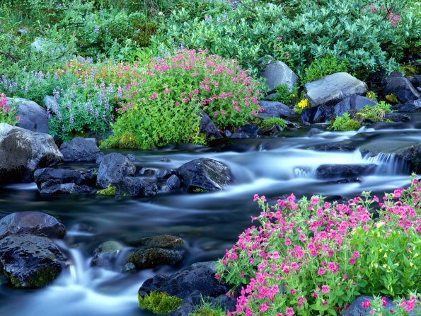 Paradise River, Mount Rainier National Park, Washington