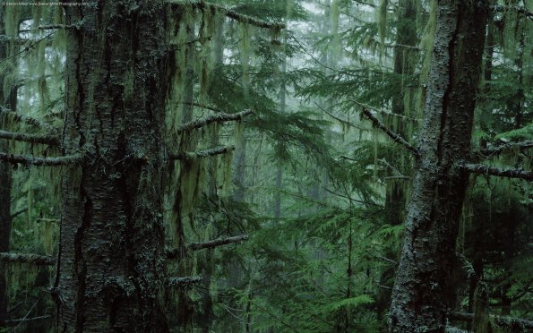 olympic_national_forest