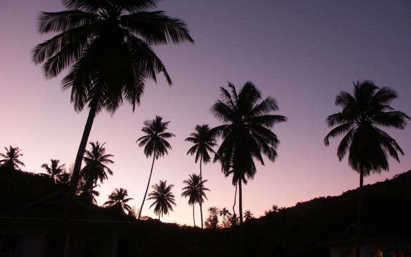 twilight_palms
